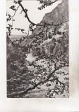bnk cp Valea Putnei la Lepsa - circulata