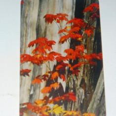 Cartela telefonica - ARTA - PEISAJ - NATURA - FRUNZE - TOAMNA - 2001 - 2+1 gratis pt produse la pret fix - RBK4437 - Cartela telefonica romaneasca