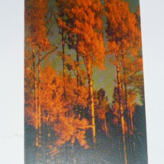Cartela telefonica - ARTA - PEISAJ - NATURA - COPACI - TOAMNA - 2000 - 2+1 gratis pt produse la pret fix - RBK4431 - Cartela telefonica romaneasca