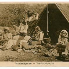 3 - Sibiu, TIGANI la cort - old postcard - unused - 1917