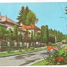 #carte postala(ilustrata) -OLANESTI-Aleea Trandafirilor - Carte Postala Oltenia dupa 1918, Circulata, Printata