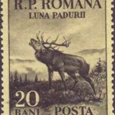 1954 - seria