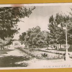 ALEXANDRIA TELEORMAN 1958