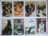 Lot 8 reviste unguresti - a KUNYA - CAINELE  - anii '70