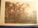 Carte Postala-ilustrata -Posta Militara Seychelles,Franta ,primul razboi mondial