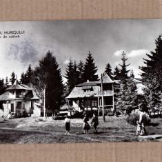 IZVORUL MURESULUI HARGHITA 1962