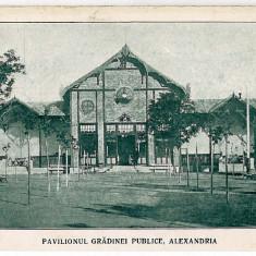 98 - Teleorman, ALEXANDRIA, public garden - old postcard - unused - Carte Postala Muntenia 1904-1918, Necirculata, Printata