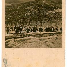 1074 - Transilvania, Forest 7 Judecatori - old postcard - used - 1916 - Carte Postala Transilvania 1904-1918, Circulata, Printata