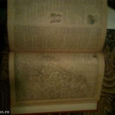 Dictionar Ilustrat
