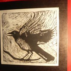 Litografie- Pasare - Cioara, semnat Gh.Botan, ex. 2/5, dim.= 26, 2 x24, 5 cm