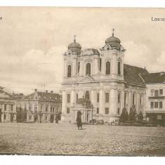 1569 - TIMISOARA, LOSONCZY Market - old postcard - unused - Carte Postala Banat 1904-1918, Necirculata, Printata