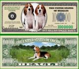 USA 1 Million Dollars Caine Beagle UNC