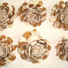 Plante naturale uscate - capete de floricele ming - cirmos - 4 cm
