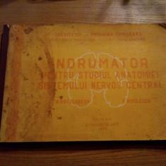 INDRUMATOR PENTRU STUDIUL ANATOMIEI SISTEMULUI NERVOS CENTRAL -- N. Rottenberg, V. Niculescu -- curs litografiat, 1976, 115 p. - Carte Neurologie
