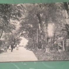 ANII1900 VINGA PARC CIRCULATA - Carte Postala Crisana 1904-1918, Fotografie