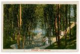34 - Arges, PITESTI, Parcul Trivale - old postcard - unused - 1918, Necirculata, Printata