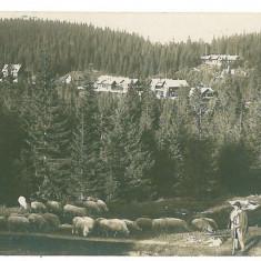 2223 - Sibiu, Hohe RINNE - old postcard, real PHOTO - used - 1927 - Carte Postala Transilvania dupa 1918, Circulata, Fotografie