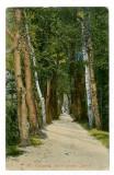 335 - Rm. VALCEA, Alee din gradina Zavoi - old postcard - unused, Necirculata, Printata