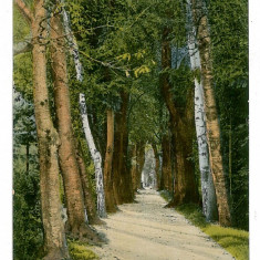 335 - Rm. VALCEA, Alee din gradina Zavoi - old postcard - unused - Carte Postala Oltenia 1904-1918, Necirculata, Printata