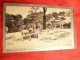 Ilustrata Gradina Zoologica din Cincinnati ,Ohio - Zebre, inc.sec.XX