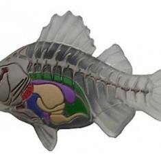 jibbitz CROCS - bijuterii/accesorii  Translucent fish bones