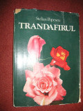 Trandafirul - Stelian Popescu