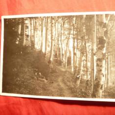 Fotografie- Ilustrata Postavaru - Foto G.Opreanu , Zarnesti, interbelica