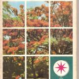 (C5074) VULTURI PE ARBORELE DE FOC DE IULIU RATIU, EDITURA SPORT-TURISM, 1978 (2) - Carte de calatorie