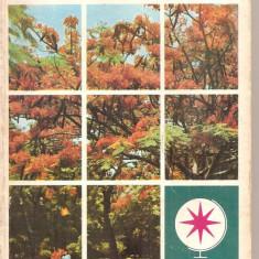 (C5074) VULTURI PE ARBORELE DE FOC DE IULIU RATIU, EDITURA SPORT-TURISM, 1978 (2), Alta editura