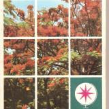 (C5068) VULTURI PE ARBORELE DE FOC DE IULIU RATIU, EDITURA SPORT-TURISM, 1978 (1) - Carte de calatorie