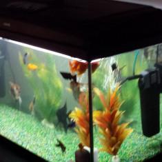 Vand acvariu cu pesti