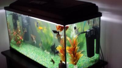 Vand acvariu cu pesti foto