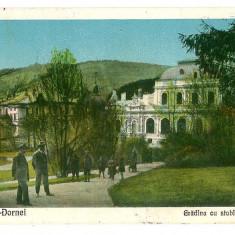 121 - Bucovina, Suceava, VATRA DORNEI, Garden - old postcard - used - 1927 - Carte Postala Bucovina 1904-1918, Circulata, Printata