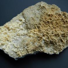 Specimen minerale - CALCITA - Fosila roca