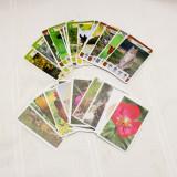 Cartonase Penny  ROMANIA -Descopera frumusetile naturale INDISPONIBILE