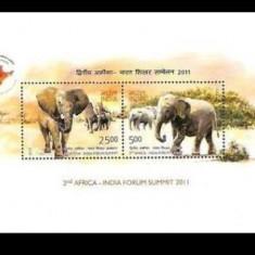 INDIA 2011 ELEFANTI