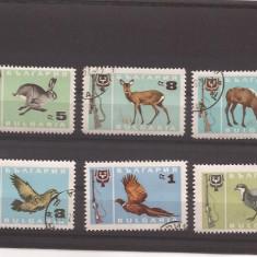 Bulgaria 1967 - animale, serie stampilata - Timbre straine