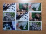 Stikere animale Coop, 9 bucati