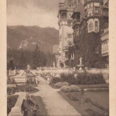 SINAIA CASTELUL PELES, FATADA SI TERASE - Carte Postala Muntenia dupa 1918, Necirculata, Printata