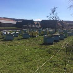 Vând familii de albine - SUPER OFERTĂ!!! - Apicultura