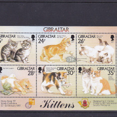 Fauna pisici de rasa, Gibraltar. - Timbre straine, Nestampilat