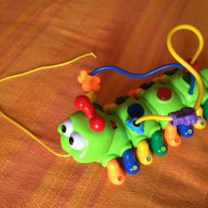Omida muzicala - Jucarie zornaitoare, 18-24 luni, Unisex, Multicolor, Plastic