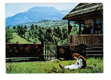 Carte Postala / vedere 1974, Muntii Rodnei, Vf Pietrosul, Maramures, costum trad