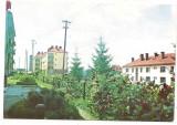 % carte postala (ilustrata)-HARGHITA-Vlahita, Necirculata, Printata