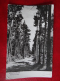 Aug15 - Vedere/ Carte postala -  Ramnicul Valcea, Circulata, Printata