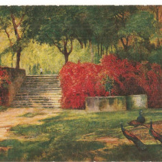CPI (B5212) CARTE POSTALA - PEISAJ DE TOAMNA, PAUNI, DATATA: 1921, Necirculata, Fotografie