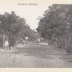 ROMANIA CARTE POSTALA CETATEA ALBA-GRADINA PUBLICA, LOT 2 CP - Carte Postala Moldova dupa 1918, Necirculata, Printata