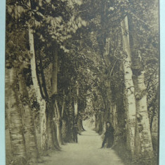 RAMNICU VALCEA - ALEEA DIN GRADINA ZAVOIU - SEPIA - Carte Postala Oltenia 1904-1918, Necirculata, Fotografie