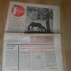 ZIARUL FLACARA NR 23 / 1981 4 IUNIE ROMANIA NORVEGIA 1-0