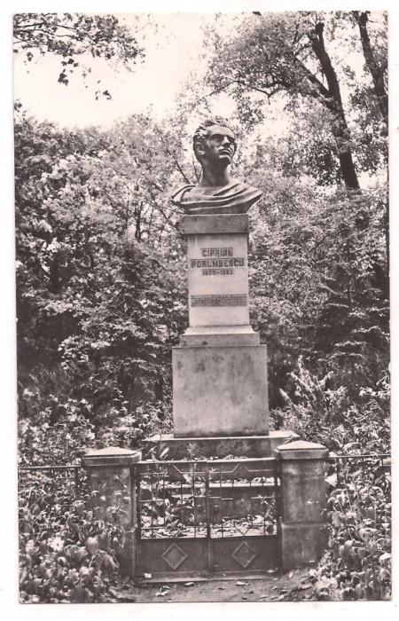% carte postala (ilustrata)-SUCEAVA-Statuia lui Ciprian Porumbescu foto mare